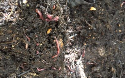 Intro to Backyard Gardening: What about Compost?