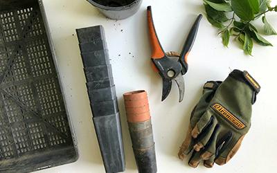 Backyard Veg Workshop 1: Getting Started